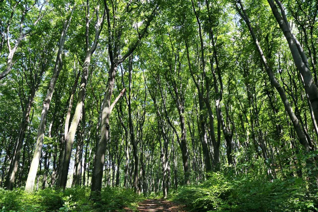 Las otaczający zamek